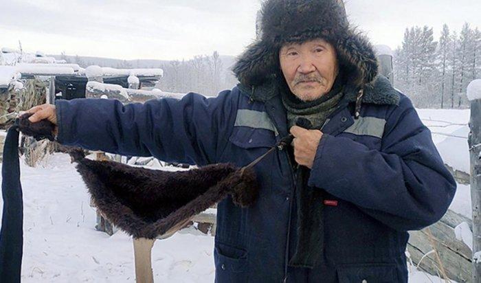 Якутский охотник одел своих коров в меховые бюстгальтеры