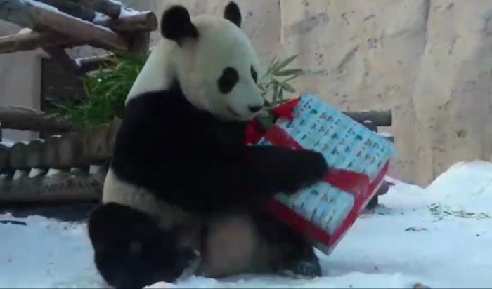 Вмосковском зоопарке звери получили свои новогодние подарки (Видео)