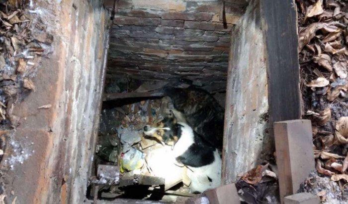 ВоВтором Иркутске спасли двух собак, провалившихся вподполье (Видео)