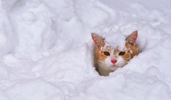 Более 6000тонн снега было вывезено изИркутска запрошедшие выходные