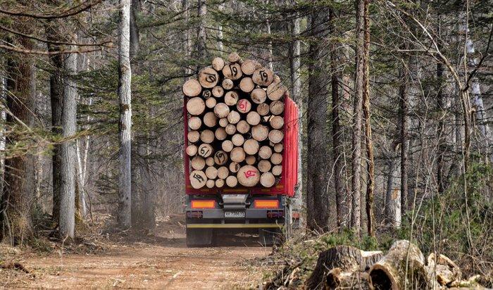 Около 150 кубометров леса незаконно экспортировали из Иркутской области в 2020 году