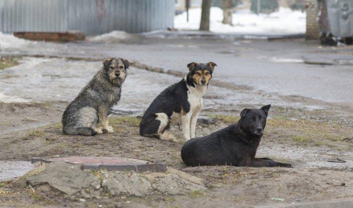ВоВтором Иркутске водитель спас девочку отстаи собак (Видео)
