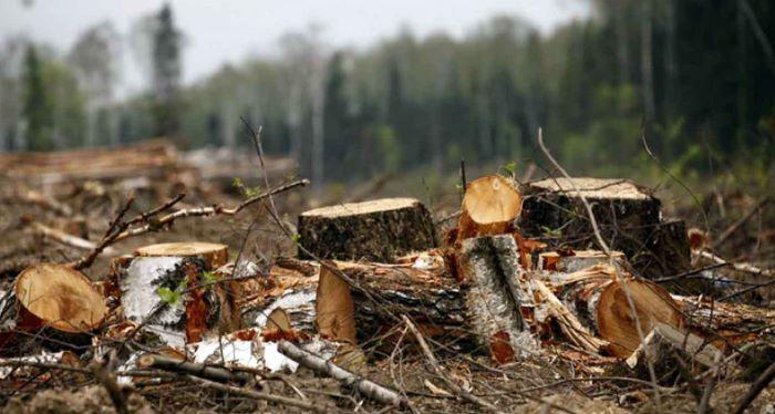 Заларинский районный суд вынес приговор местному жителю,  обвиняемому в незаконной вырубке леса