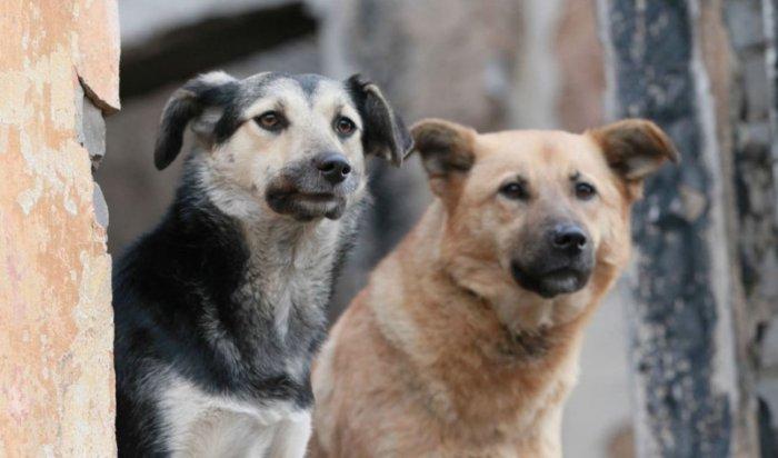Приангарье внесет свои предложения в федеральный закон об ответственном обращении с животными