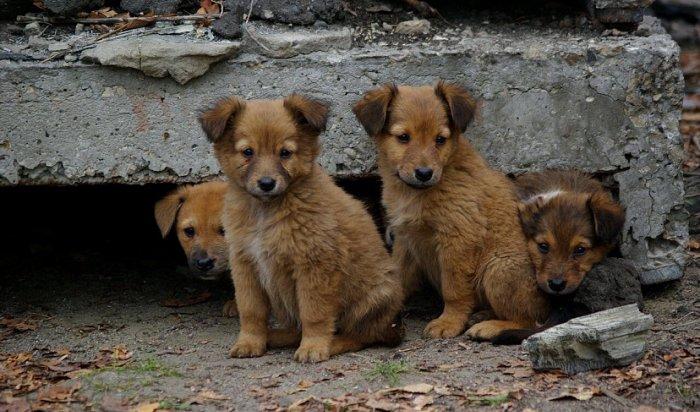 В Иркутске начали чипировать бездомных животных