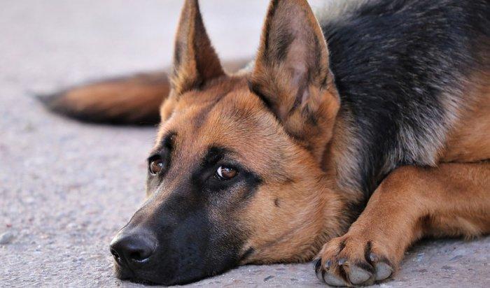 ВСеверной Осетии бездомная собака устроилась наработу вмясной магазин (Видео)