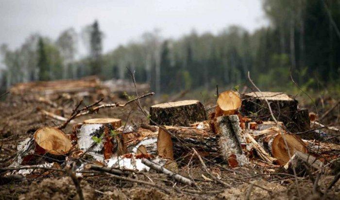 ВИркутской области депутата Думы подозревают ворганизации незаконной рубки леса