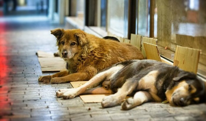 Реализацию мероприятий по обращению бездомными животными обсудили в Черемхово