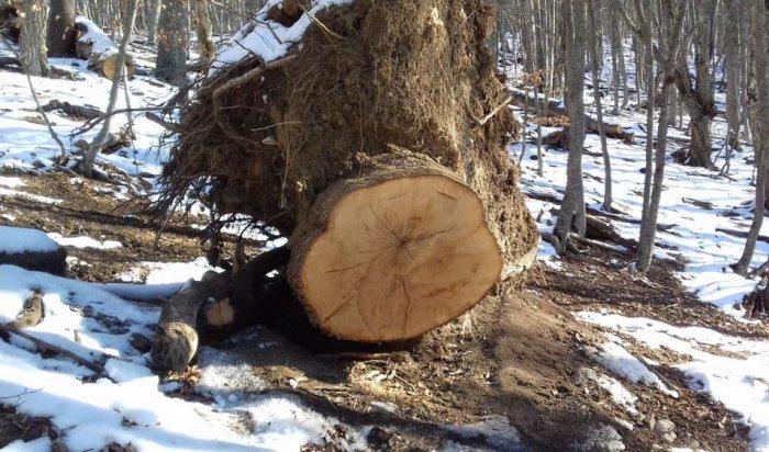 ВИркутской области 8из12виновным внезаконной рубке леса суд изменил наказание