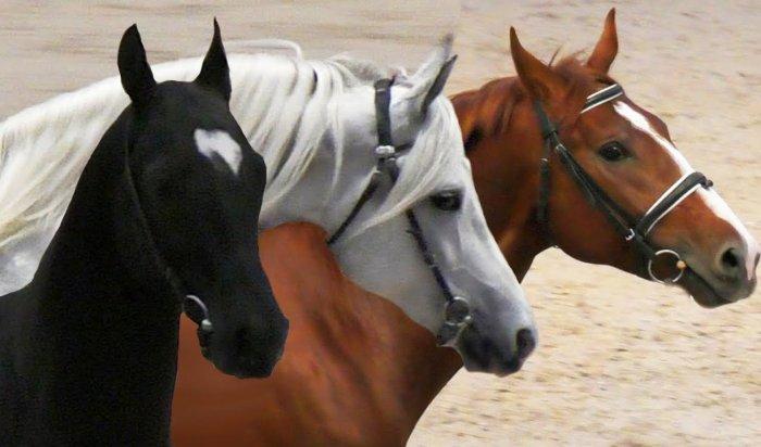 НаАлтае полицейский расстрелял девять лошадей (Видео)