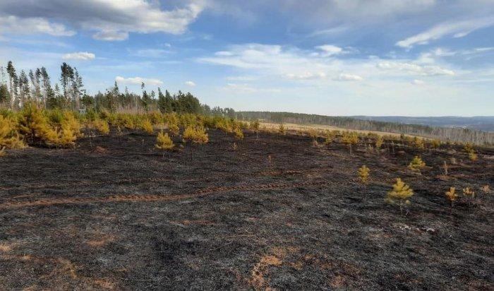 ВИркутском районе пастух начал выжигать сухую траву ислучайно устроил пожар