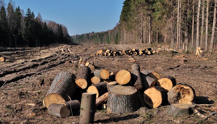 Предприниматель в Чунском районе предстанет перед судом за контрабанду леса на 58 млн рублей