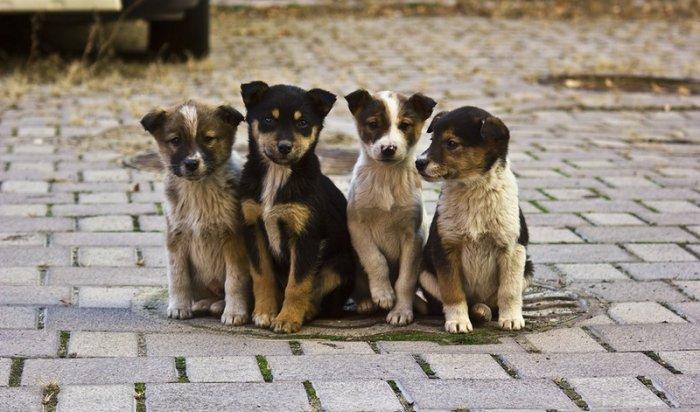 ВИркутской области к1июля подсчитают всех бездомных животных