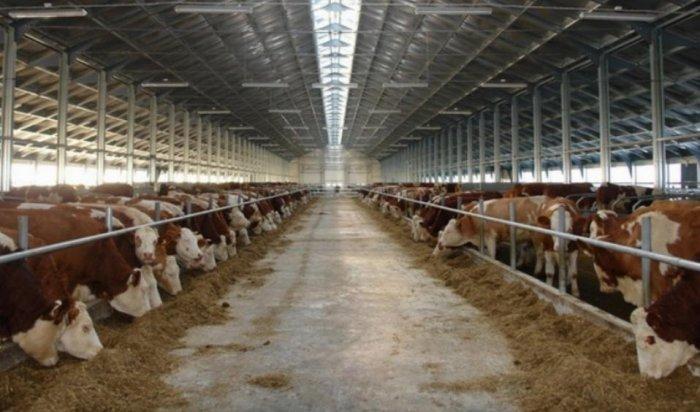 Карантинную площадку для передержки сельскохозяйственных животных планируют создать в Приангарье