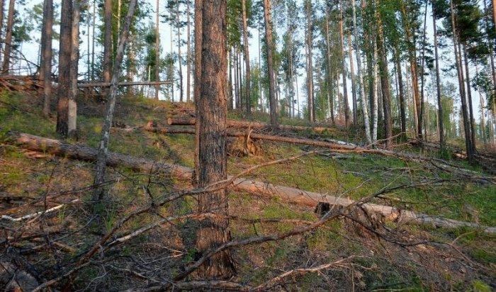 Частота незаконной вырубки леса в Приангарье снизилась на 38%