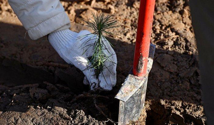 Более 1,5 тысяч деревьев высадят в рамках акции «Мой зеленый Иркутск»