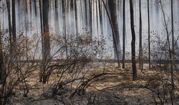 Особый противопожарный режим ввели всеверных районах Приангарья