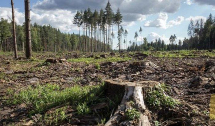 ВПриангарье  для отслеживания вырубки лесов появятся дроны споддержкой искусственного интеллект