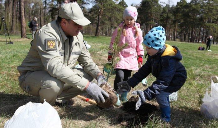 Две тысячи иркутян приняли участие вакции «Посади дерево— подари планете жизнь»