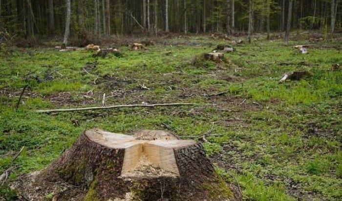В Эхирит-Булагатском районе перед судом предстанет местный депутат за незаконную вырубку леса