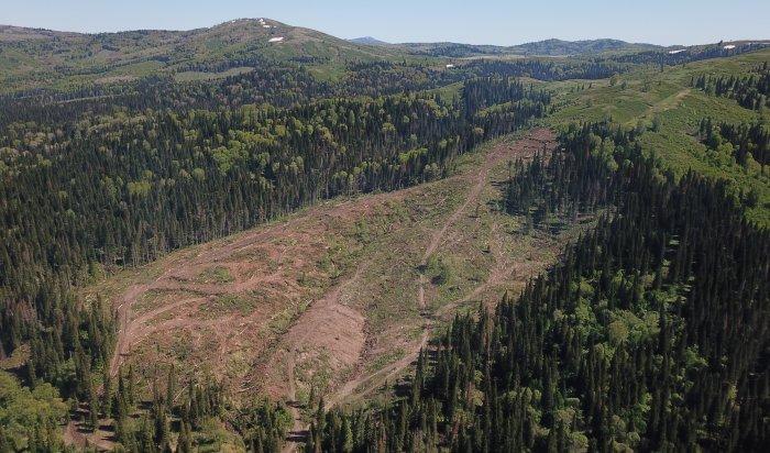 Приангарье возглавило рейтинг регионов пообъемам незаконных рубок леса