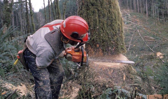 ВЧунском районе выявили незаконную вырубку леса под видом расчистки деляны