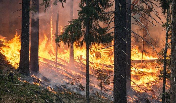В Иркутской области продолжается ликвидация лесных пожаров