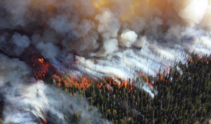 Иркутская область уже неделю остается лидером среди регионов поплощади лесных пожаров