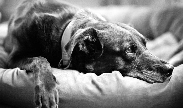 Житель Иркутска жестоко расстрелял бездомных собак наглазах усоседей