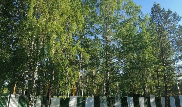 122дерева вырубят вгородке ИВВАИУ вИркутске из-за строительства жилых домов