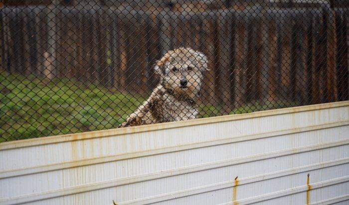 ВИркутской области утверждена Концепция создания сети приютов для содержания животных без владельцев