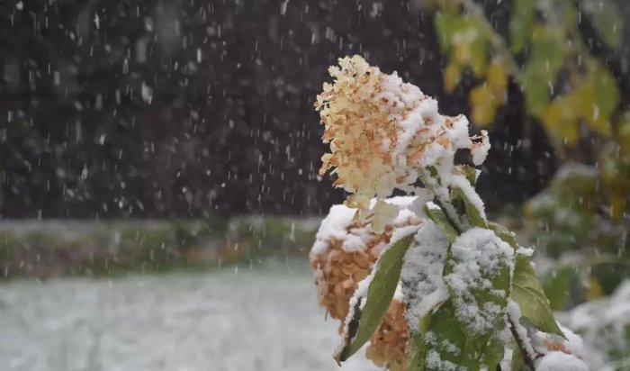 На юге Африки выпал снег  (Видео)