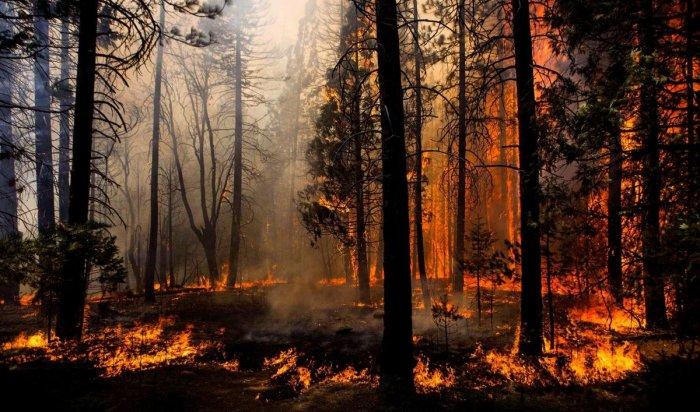 В Иркутской области площадь лесных пожаров  достигла свыше 107,3 тысячи га