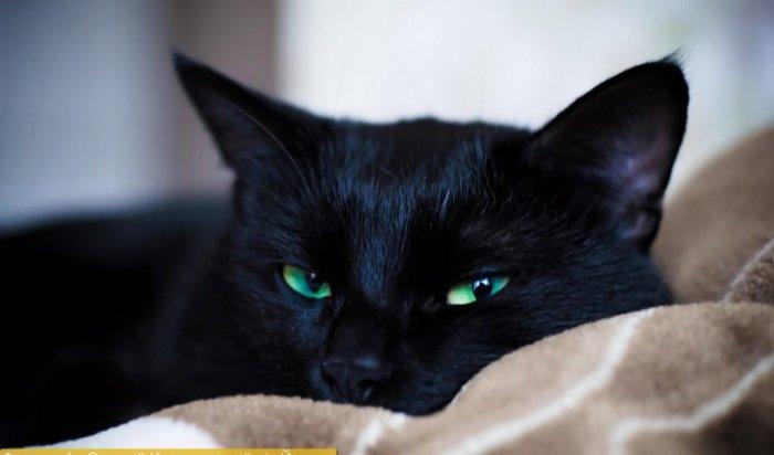 Домашний кот спас хозяев отмедведя (Видео)