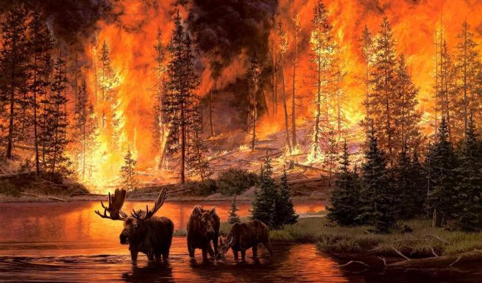 Иркутская область занимает второе место поплощади лесных пожаров