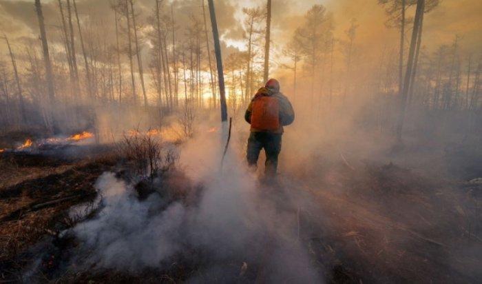 Засутки вРоссии ликвидировали 65лесных пожаров