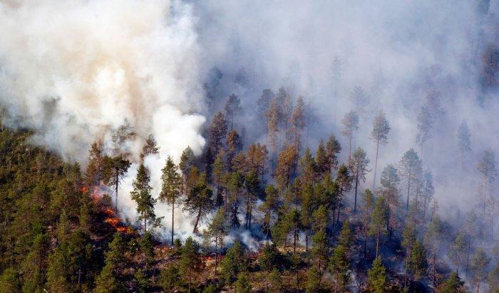 Два пожара ликвидировали заминувшие сутки влесном фонде Иркутской области