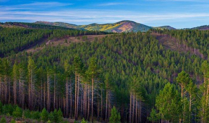 ВИркутской области объем незаконно вырубленного леса сократился на59%