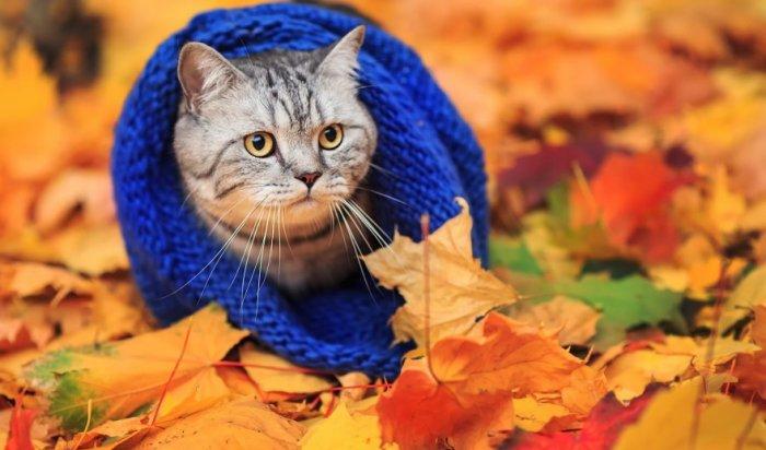 Осенний чек-лист: что иркутянам успеть сделать осенью?