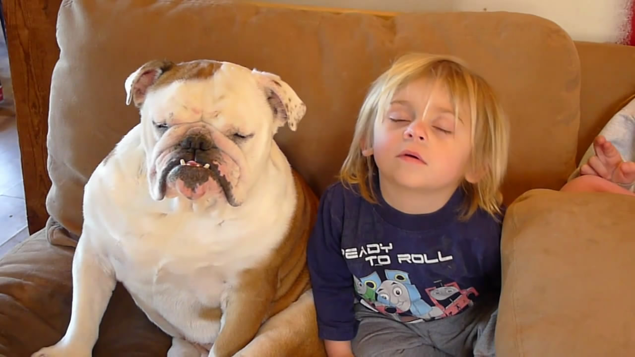 Прикольные, прикольные животные видео смотреть онлайн до слез для детей