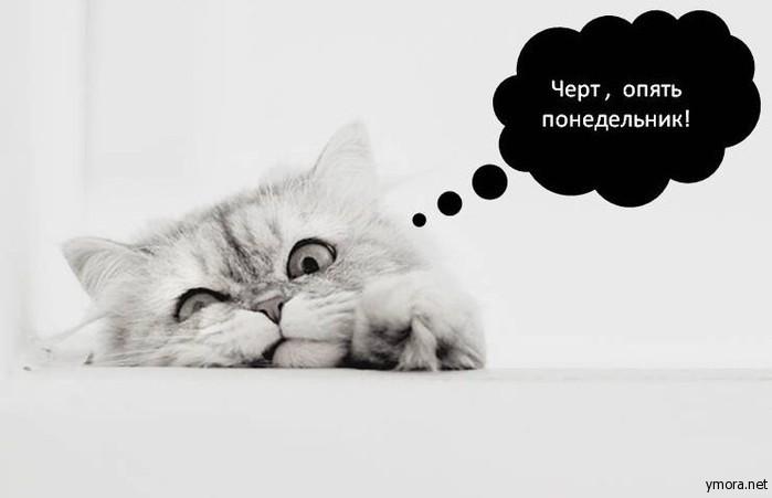 Понедельник день тяжелый картинки смешные с кошками, защиты
