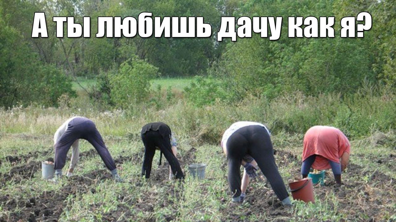 zasadil-v-zhopu-babushke