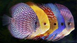 Выставка экзотических рыб «Водный мир»