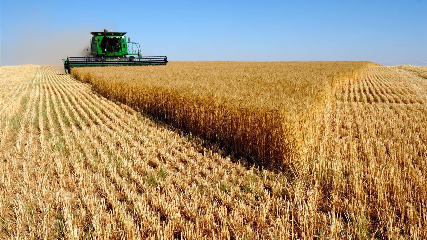 Сельскохозяйственные культуры с картинками